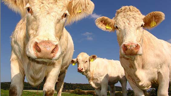 soft commodities agricultural goods grain crops, beef, timber and salmon