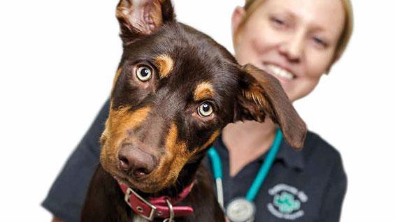 Greencross pet care article vet