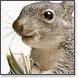 Squirrelaway